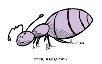 Ant_01
